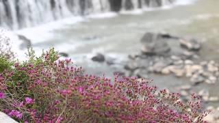 직탕폭포의 봄