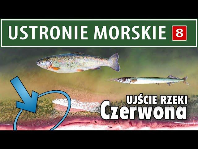 USTRONIE MORSKIE ➤ Ujście rzeki CZERWONA  (opis łowiska)