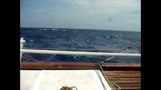 Catamaran James Wharram tiki 31 sailling in open sea