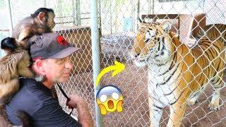 Monkeys Visit Exotic Animal Sanctuary!