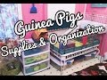 Guinea Pigs Supplies & Organization