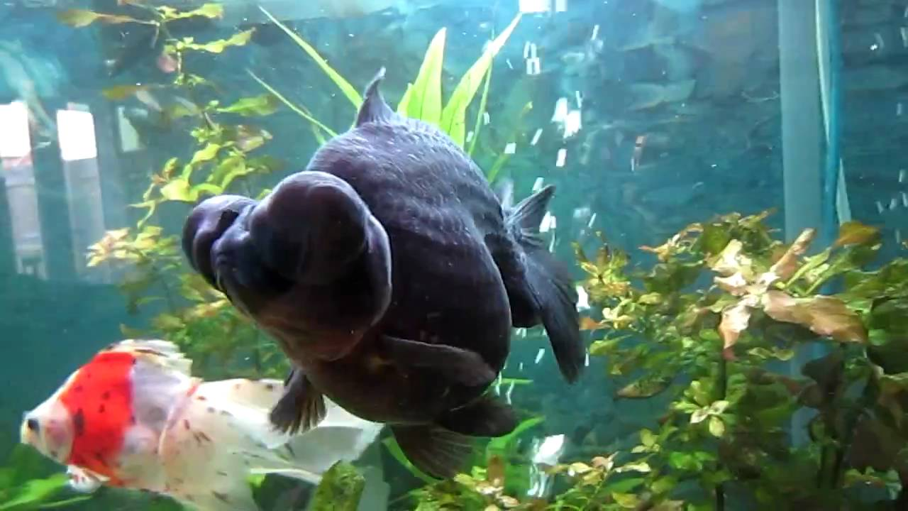 how to clean black fish