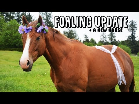 life-update|-foal-watch-+-a-new-horse?!?