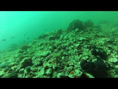 San Antonio Cave & reef