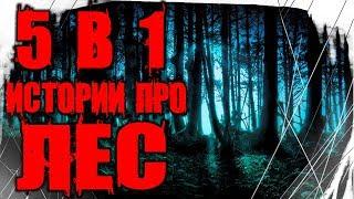 Страшные Истории - 5 Историй Про Лес в 1 Видео