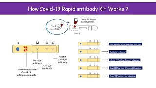 How Covid 19 rapid detection kit (Antibody kit) works?