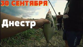 30 Сентября Рыбачим на реке Днестр Атака маленьких сомов