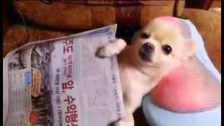 Adorable Cute South Korean Dog Gets Neck Massage