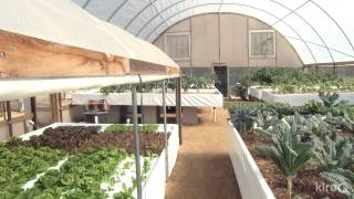 Aquaponics | Austin Aquaponics | Central Texas Gardener