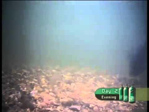 Вопрос: Вы не заметили отсутствие клева у рыб по всей территории страны?