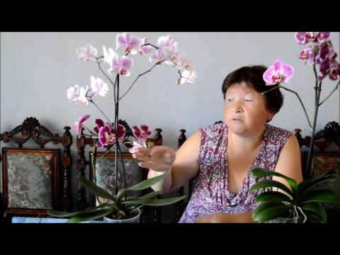 Заболевания и вредители орхидей