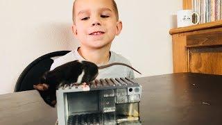Lego Mouse Trap Build Live Catch Mouse Trap