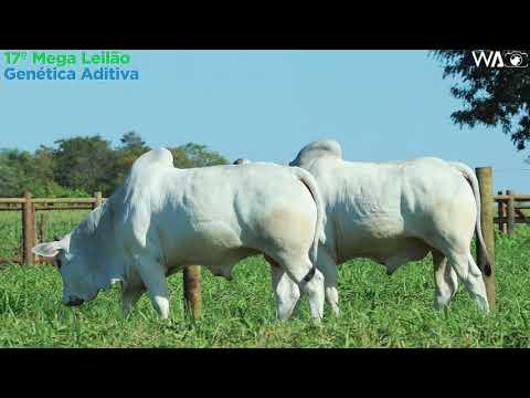 LOTE 155 -  DUPLO - REM 10168, REM 10298 - 17º Mega Leilão Genética Aditiva 2020