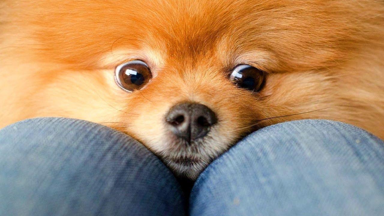 Neden daire için tüm köpek ırkları yaratılmıyor