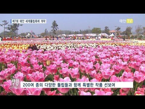 태안TV - 제7회 태안 세계튤립축제 개막
