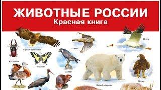 Красная книга России (рассказывает Владимир Кревер)