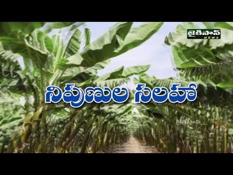 రబి లో వేసే పంటలలో ఎలాంటి జాగ్రత్తలు తీసుకోవాలి | Crops Cultivation Techniques | JaiKisan News