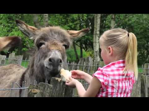 Family Glamping: Children Interacting With All The Animals