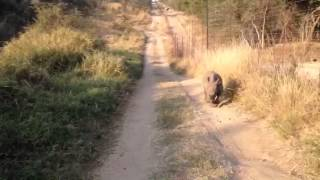 Gertjie takes an early morning run