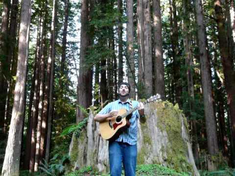 Redwood Roots