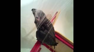 Жако принимает душ