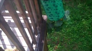 Rachael's City Picker Garden Week 3 Update Part 2