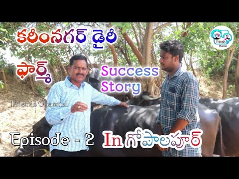 Karimnagar Dairy Farm Success Story In gopalpoor  Episode 2 | Friends Channel