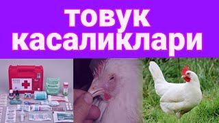 TOVUQ KASALLIKLARI / грипп товук / CHUMA KASALLIGINI QANDAY DAVOLASH / чумо касал/ порода Леггорн