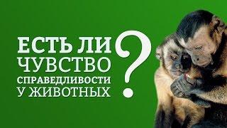 Есть ли чувство справедливости у животных? | IQ