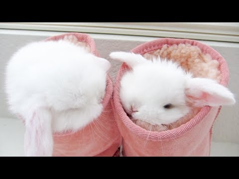 Cute baby bunnies love to be SQUISHED!