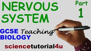 The Nervous System, Part 1. GCSE BIOLOGY Science