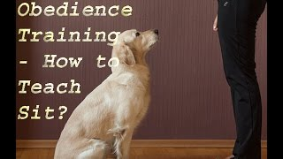 Basic Dog Obedience Training - How To Teach Sit?