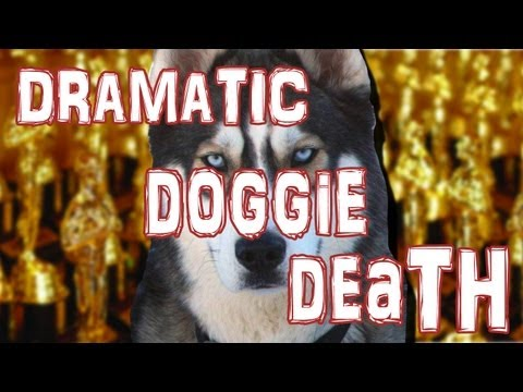 Husky's Dramatic Death Trick Is Amazing (VIDEO)