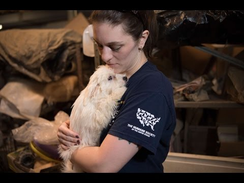 Breaking News: Puppy mill rescue in NC