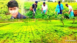 Moi bhagania Chora | video abidul khan and Sohidul khan album /ak all networks.