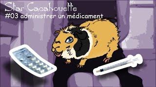 administrer un médicament à un cochon d'Inde