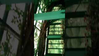 Darjeeling botanic garden