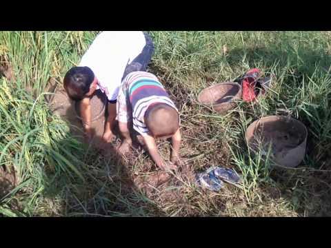 Những thanh niên phá lúa MÙA CÁ CẠN miền tây (phần 1) -  săn bắt và nấu nướng