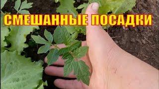 Садим помидоры, редиску, лук, салаты в одну грядку