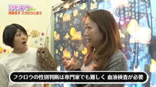月島にある今話題のフクロウカフェへ! リポーター:阿部哲子&ばーん.