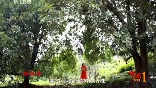 中國桂花之鄉 湖北咸寧