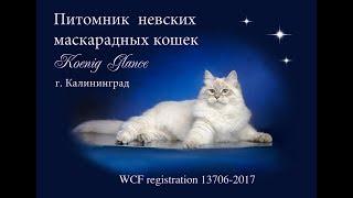 "Питомник  ""KOENIG GLANCE"". 9 августа 2017 г."