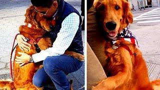 Dieser Hund ist besessen davon fremde Menschen zu umarmen!
