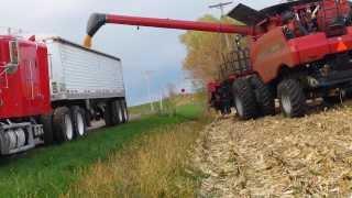case ih 7120 combine harvesting corn