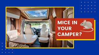 Getting Rid of Mice in Camper and Cleaning Up Their Droppings