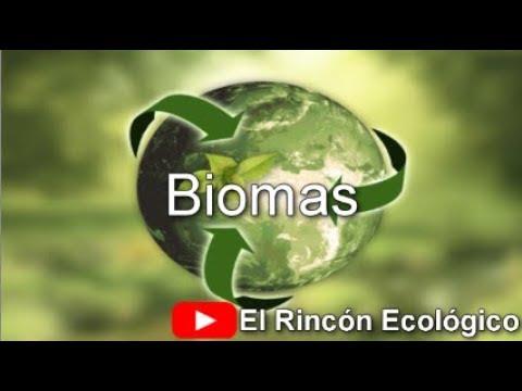 ¿qué-son-los-biomas?-/-tipos-de-biomas-y-sus-características-/el-rincón-ecológico