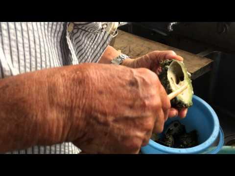 シリタカ貝 身の抜き方食べ方紹介 和歌山釣太郎