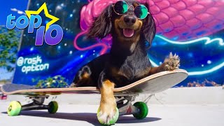TOP 10 Skateboarding Dogs