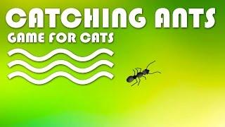 Cat Game on Screen - Catching Ants! ENTERTAINMENT VIDEO FOR CATS.