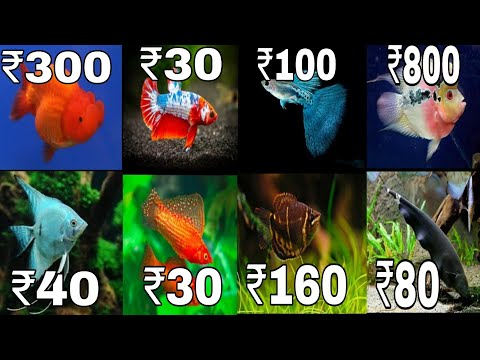 Aquarium Fish Price In India 2020